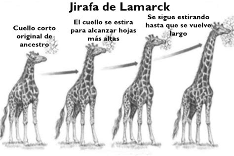 Teoría de Lamarck sobre la evolución: origen, postulados ...
