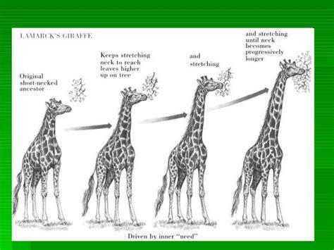 Teorías de la evolución de darwin y lamark