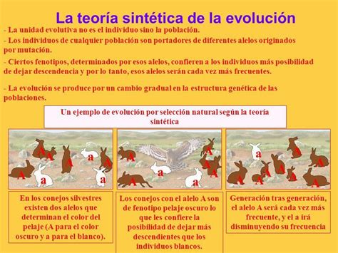 TEORÍAS DE LA EVOLUCION