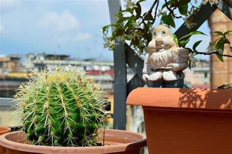 Terraza Florecida Con El Gato Curioso Imagen de archivo ...