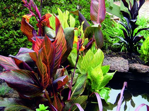 Tesselaar Plants Helps Rev Up Your Outdoor Living with ...
