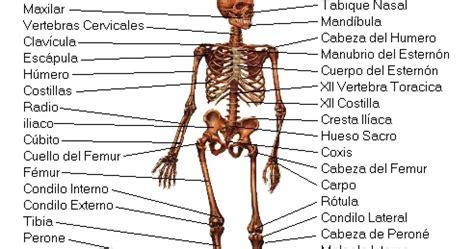Test de Oposiciones Online: Huesos Del Cuerpo Humano