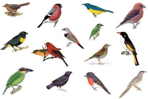 Testez vous sur ce quiz : Noms d oiseaux pour personnages ...