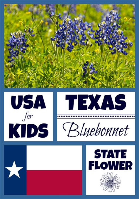 Texas State Flower   Bluebonnet by USA Facts for Kids