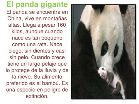 Texto Informativo Corto De Animales Para Niños   Hay Niños