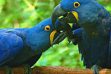 The 10 Most Beautiful and Must see Birds of The Amazon ...