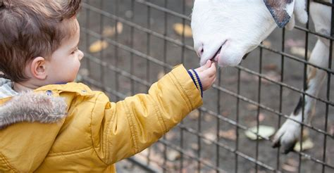 The 5 Best Petting Zoo Party Planners Near Me  with Free ...