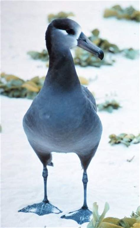 The Albatross Bird: The True Majestic King Of The Skies