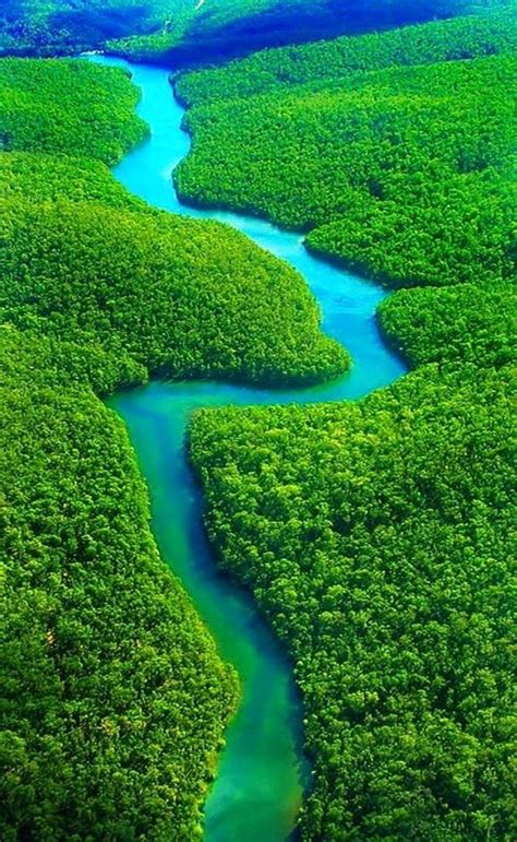 The Amazon Rainforest, Brazil 10 Worlds Amazing Forests ...