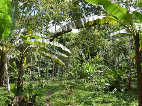 The Amazon Rainforest   Chaikuni Institute