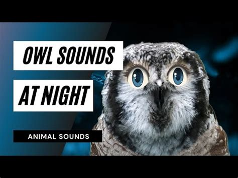 The Animal Sounds: Owl Sound Effect at Night / Animation ...