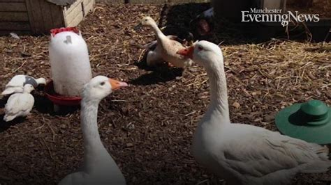 The best farms and petting zoos in Greater Manchester ...