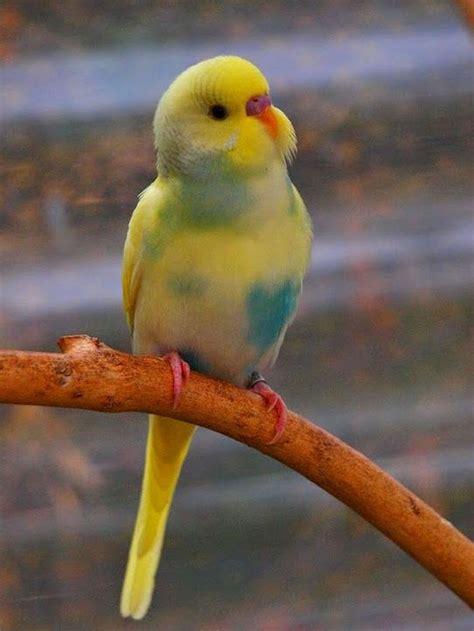 The best pet birds for kids 14 – gardenmagz.com