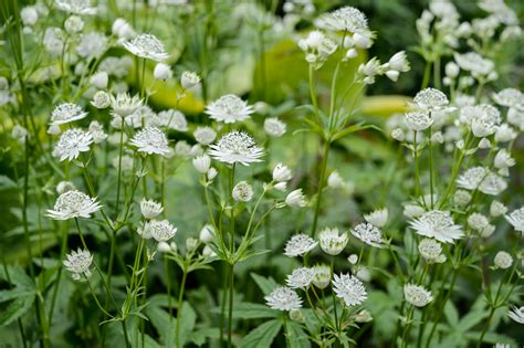 The Best Shade Loving Plants | gardenersworld.com