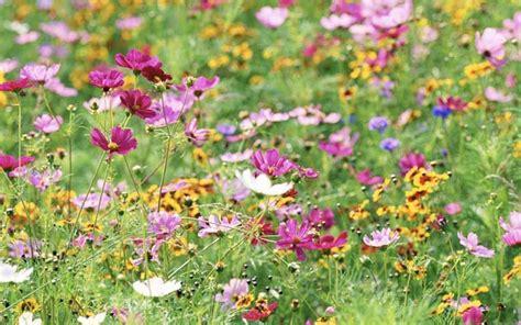 The Best Way To Start Wildflower Seeds   Wildflower seeds ...