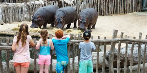 The best zoo keeper for a day experiences in Australia ...