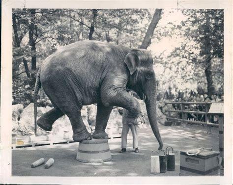 The Circus  NO SPIN ZONE : Vintage Milan Italy Zoo  1949