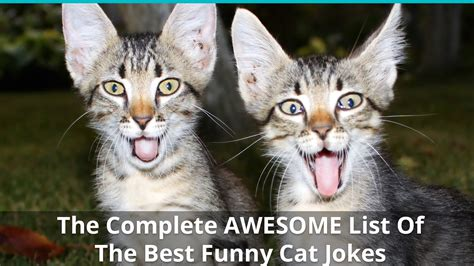 The Complete AWESOME List Of The Best Funny Cat Jokes