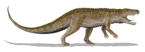The Dragon s Tales: Were the Basal Archosaurs Endothermic?