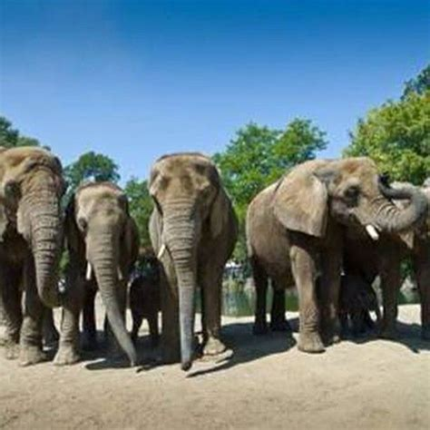 The elephants from Pittsburg Zoo are modeling again.  With ...