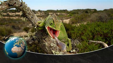 The fascinating fauna of the Mediterranean Sea   YouTube