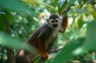 The Flora and Fauna of the Amazon Rainforest   The Inside ...
