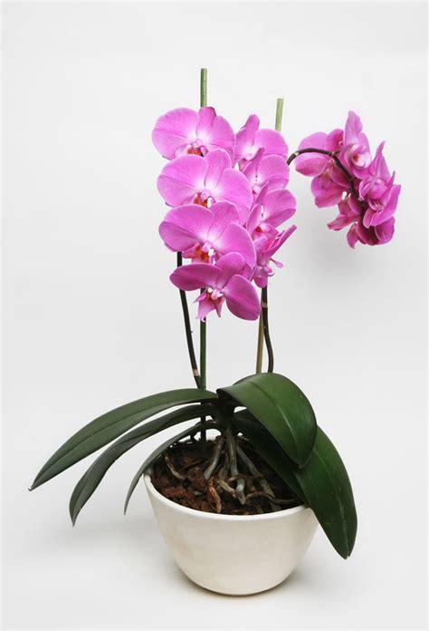 The Home Depot comparte 5 razones para regalar plantas en ...