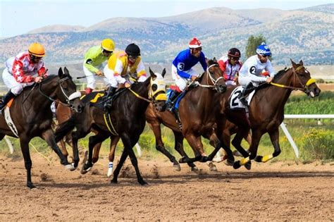 The Horse Race Predictor Review   Read Before You Buy