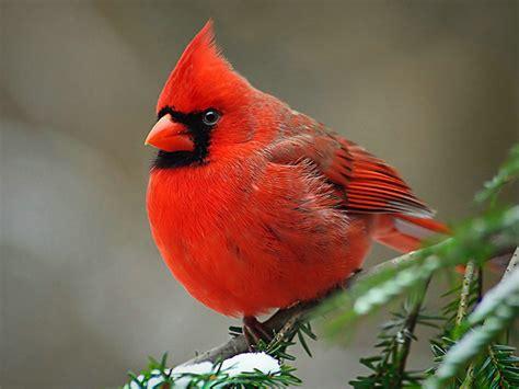 The Life of Sweet Birds: January 2011