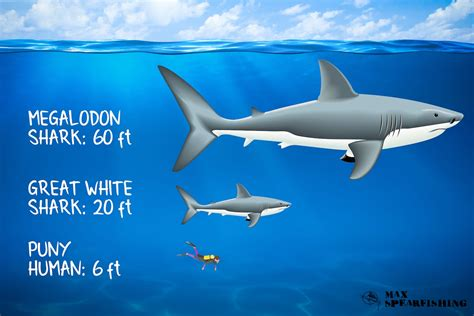 The Megalodon: The largest Shark that ever existed | Max ...
