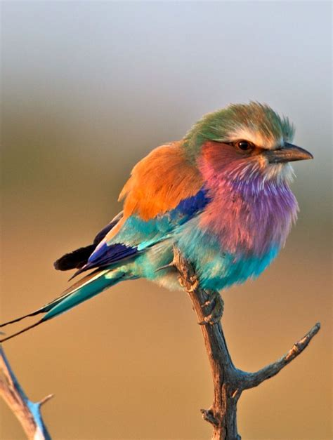 The Most Beautiful and Colourful Birds You Have Ever Seen!