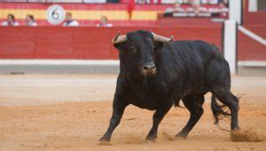 The national animal of the Spain is Bull.   Serious Facts