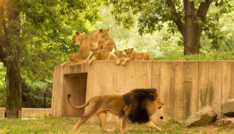 The National Zoo Is Washington DC s Best Free Activity