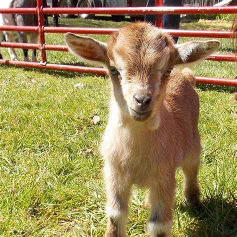 The Peaceable Kingdom Petting Zoo   Traveling Mobile ...