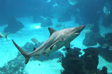 The Shark Experience Continues in the Lisbon Oceanário