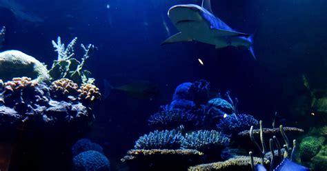 The Shreveport Aquarium opens