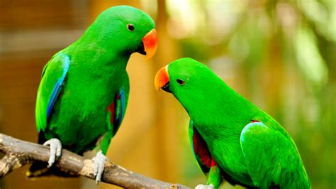 The Smartest Birds to Get as Home Pets! | Thatsweetgift