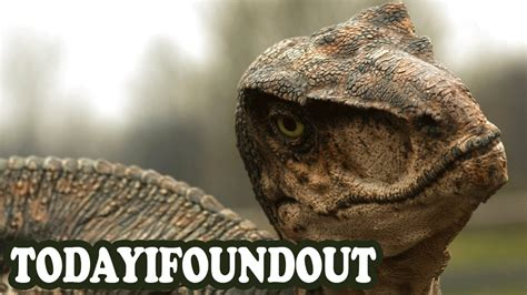 The Truth About Velociraptors   YouTube
