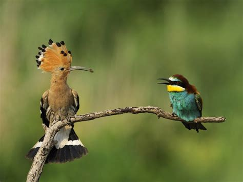 The wonderful life of birds   Cyprus Mail