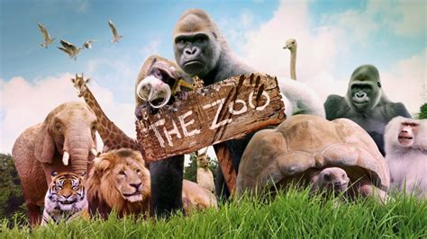 The Zoo : ABC iview