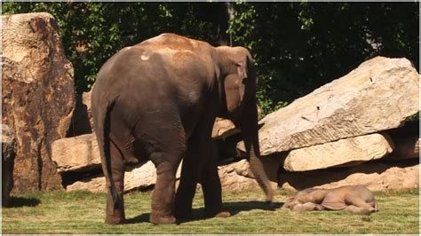 The Zookeepers Were Astonished After Entering An Elephant ...