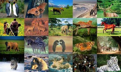 Themes & Wallpaper: Animals Photo Screensaver Volume 1 ...