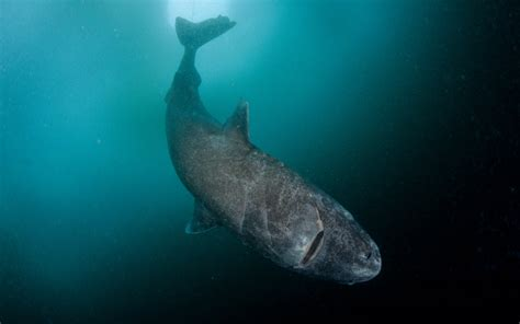 There s a Shark That Can Live to Be 400 Years Old | Travel ...
