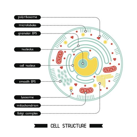 These Facts About the Cytoplasm Reveal Why it s Vital for ...