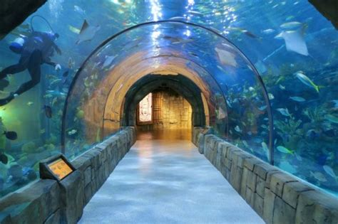 Things to do in New Orleans – The Aquarium of the Americas