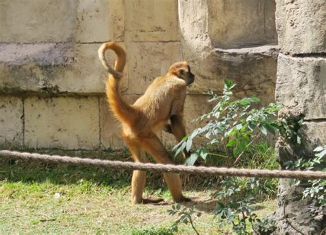 Things to do in New Orleans with kids – Visit Audubon Zoo