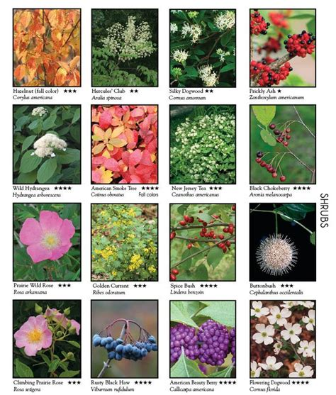 This has the names of numerous wild flowers, shrubs, and ...