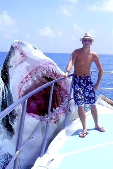 This is what a 50 foot Great White would look like if they ...