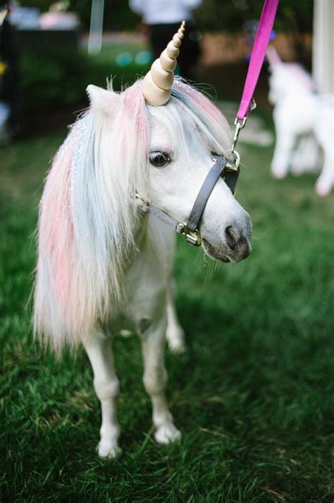 This Magical Wedding Featured a Unicorn Petting Zoo   Glamour