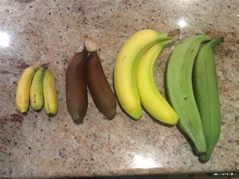 This sh*t is bananas… | principleintopractice